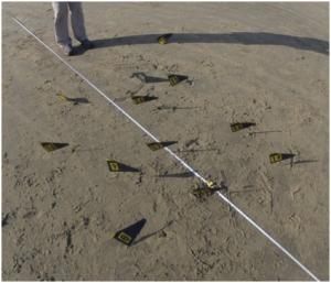 Figure 2: Metal detector hits with baseline. Photo facing NE, North Shepherd Bay (Kurt Bennett, 8 July 2013).