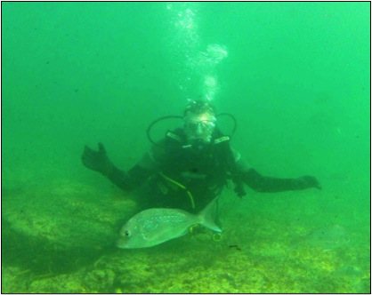 Figure 1. A SCUBA diver fluttering about underwater (author)