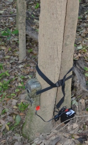 Fauna monitor in place (Photo Kate Greenwood)